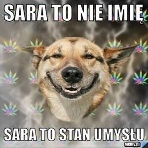 sara13